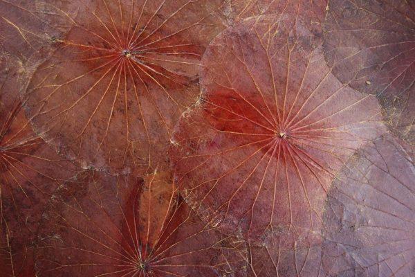120 x 80 Lotus Leaf Art Rustic Red