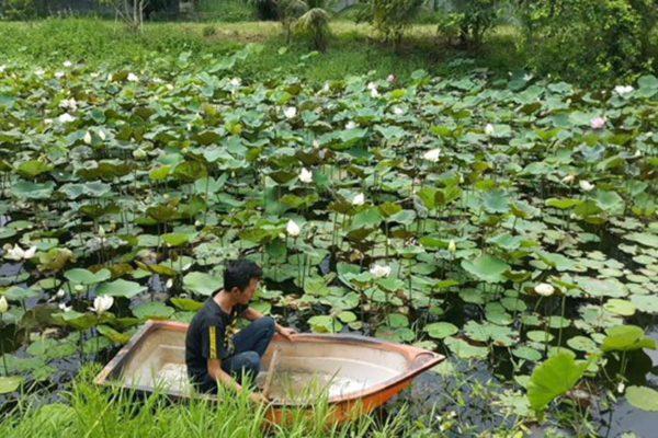 Lotus 2 boat