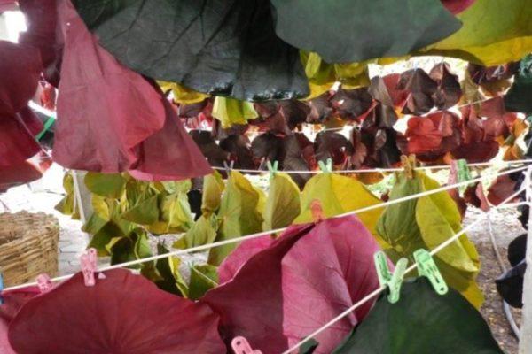 Lotus 4 hangingonline